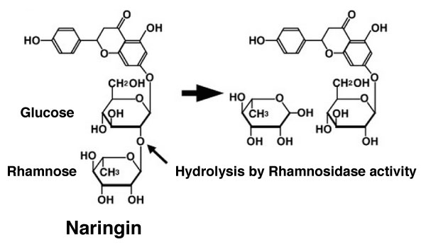 Substrate and reaction catalysed by Rham142 Rhamnosidase